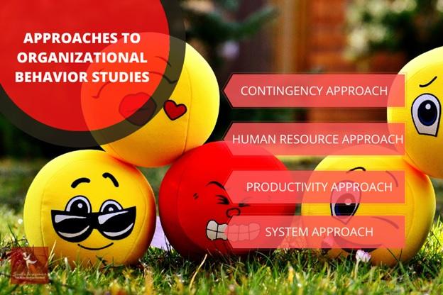organizational behavior studies