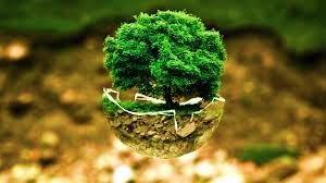 Environmental Politics Assignment Help