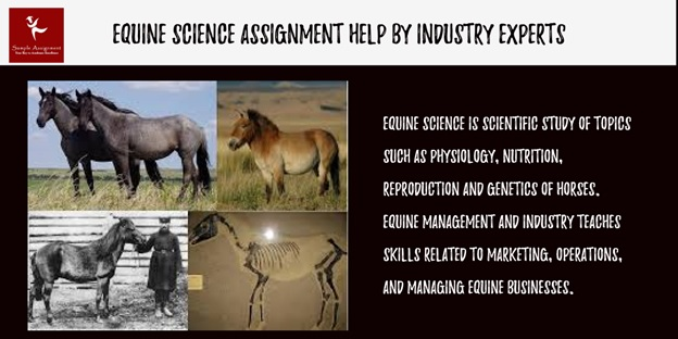 equine science assignment help
