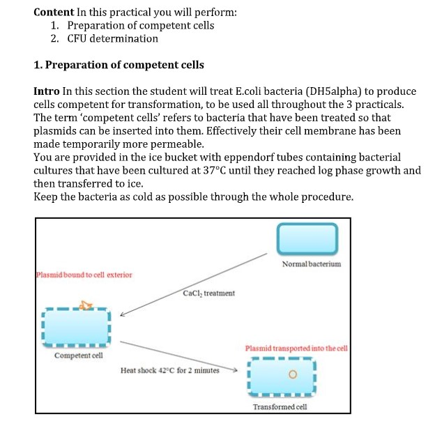 Molecular Biology Assignment Help