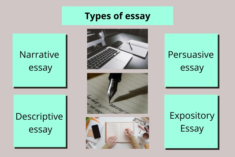 basics of essay writing