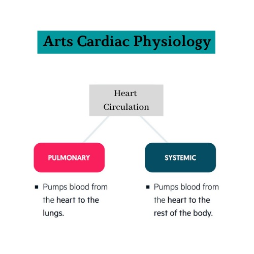 arts cardiac physiology