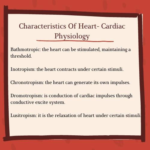 characteristics of heart cardiac physiology
