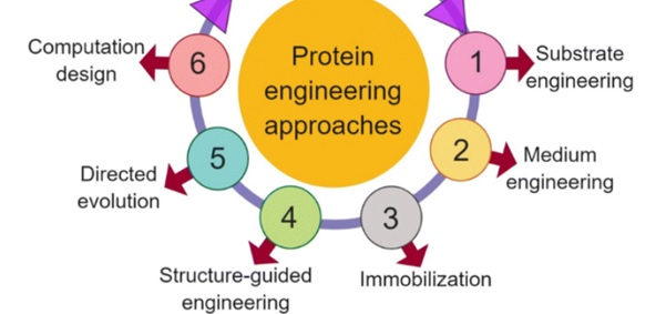 protein engineering approaches