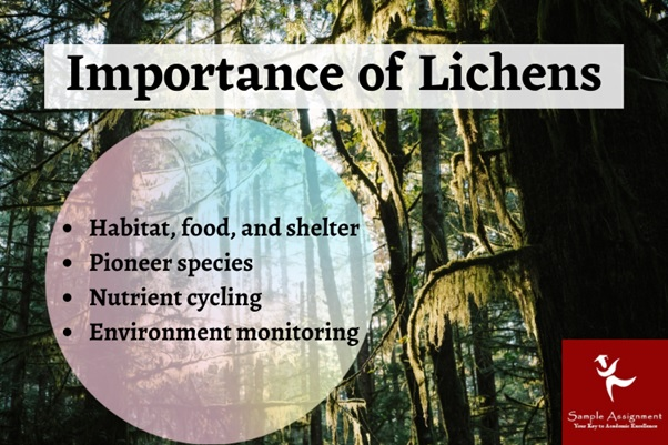 importance of lichens