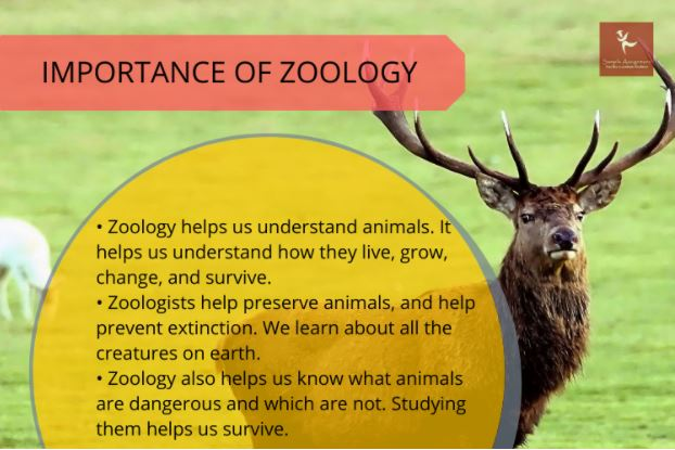 zoology assignment help experts in Canada
