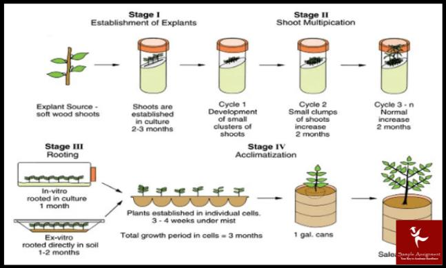 micropropagation academic assistance through online tutoring