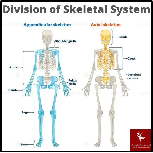 anatomy systems academic assistance through online tutoring online