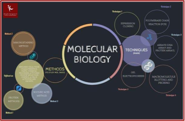 molecular biology assignment