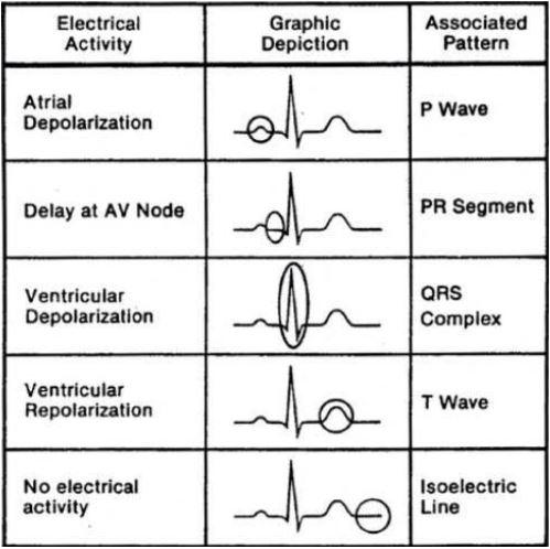 online cardiovascular physiology homework