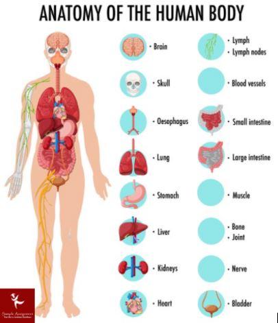 anatomy assignment