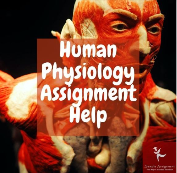 human physiology assignment