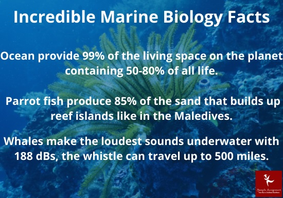 incredible marine biology facts