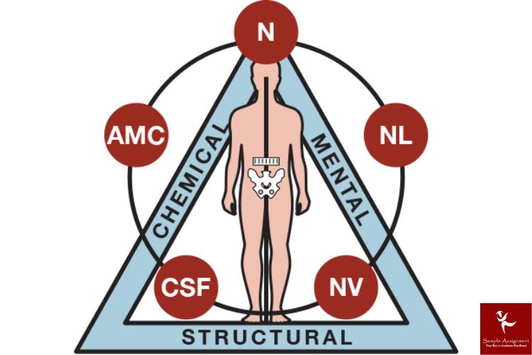 kinesiology academic assistance through online tutoring canada