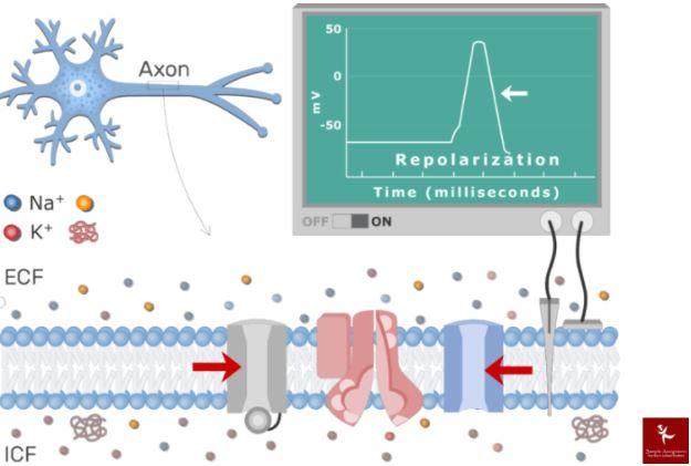 neurophysiology assignment