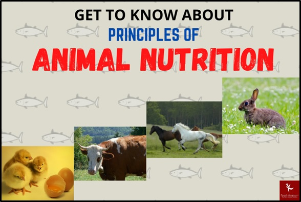 animal nutrition principles Assignment Help