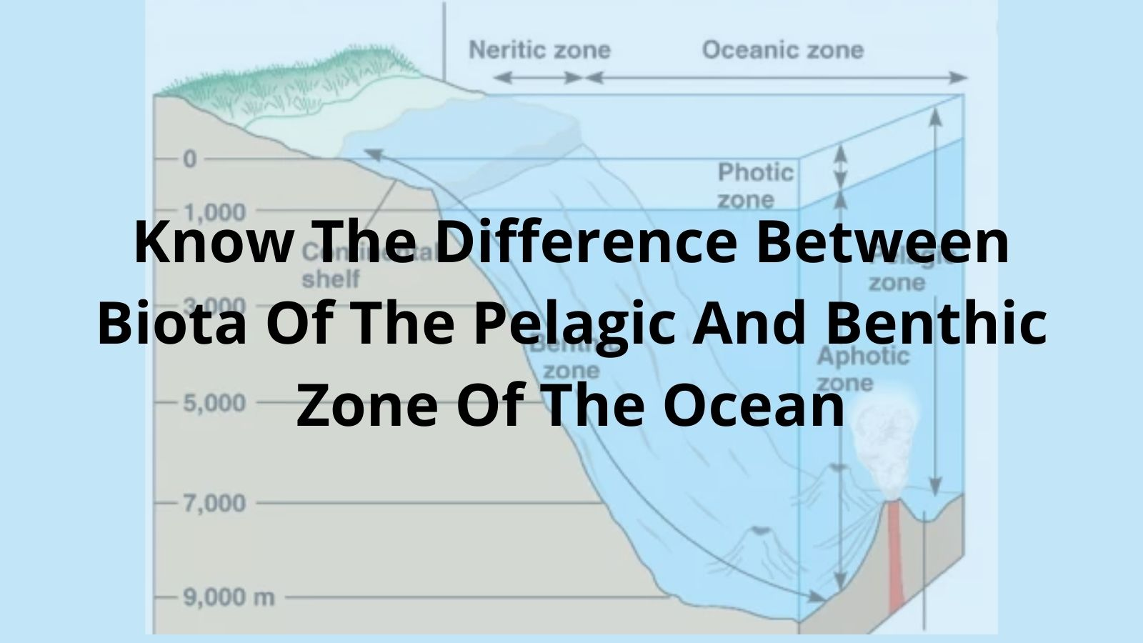 Understand The Difference Between Biota Of The Pelagic And Benthic Zone Of The Ocean