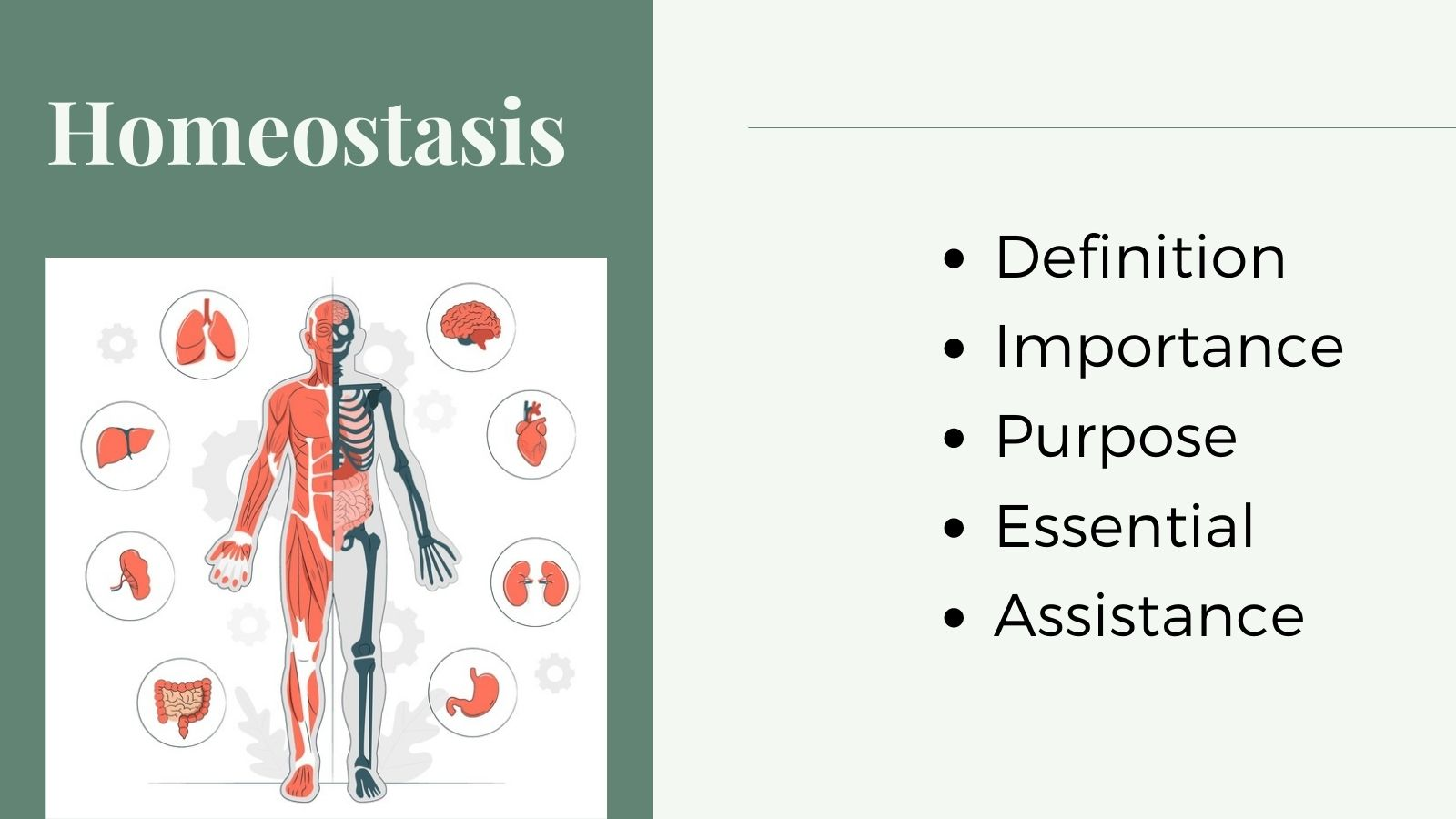 What is Homeostasis, And Why Is This Important for Survival?