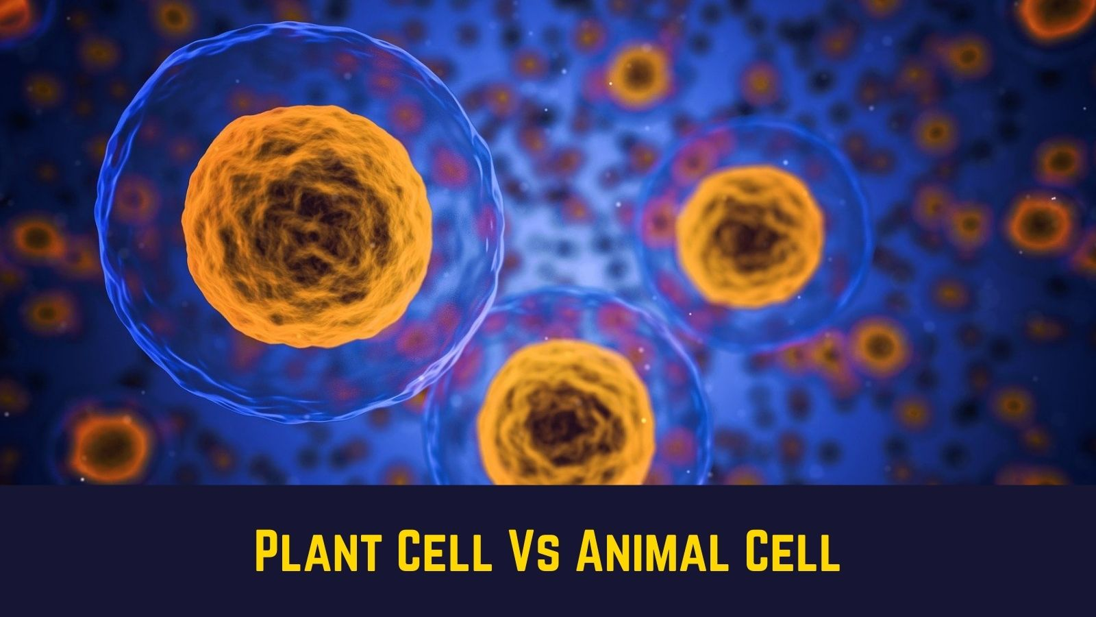 Compare and Contrast Plant Cell Vs Animal Cell